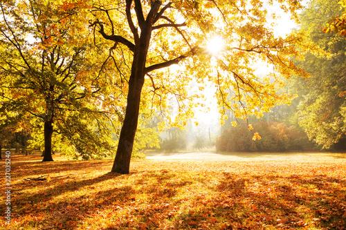 Foto Murales Sunlight through Trees City Park Berlin, autumn forest
