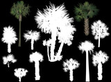 twelve palms isolated on black