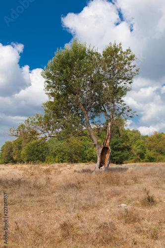 Foto Murales tree in field