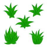 Set of succulent plant, bush, flower isolated on white background. Vector illustration. - 227048475