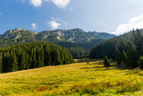 meadow in mountains - 227053447