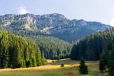 morning meadow in Tatras - 227053478