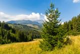 Pine tree on mountain meadow in Tatras - 227053633