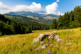old stones on meadow in mountains - 227053646