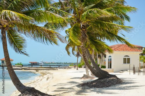 Fototapeten Strand Palm trees on a beach