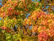 Quadro Bunter Herbst