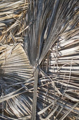 Foto Murales Dry palm leaves.