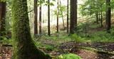 Sunny forest tree landscape. Slider equipment used. - 227109233