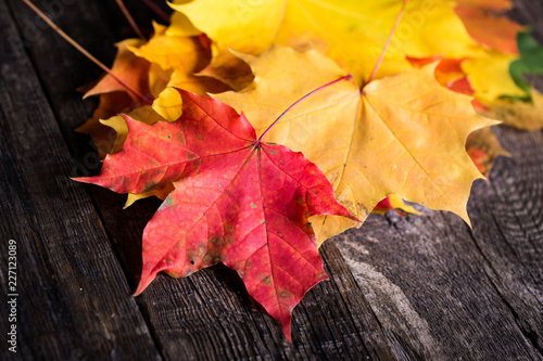 Maple leaves on wooden rustic background