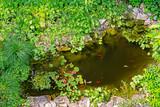 Garden pond with gold fisches - 227132032