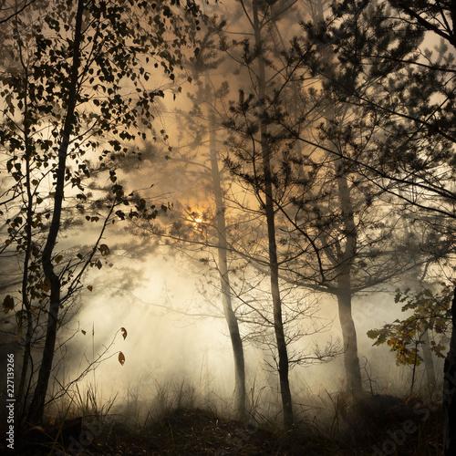 Leinwandbild Motiv Morning freshness in a beautiful autumn face, a ray of sunshine passes through the branches of redays at dawn