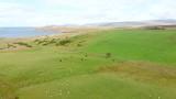 Scottish Highland fi Scottish Highland field by the sea with cattleeld by the sea with cattle - 227151647