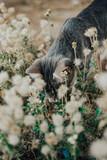 Little cat / animal on the garden / cat on the garden / gray cat / cute cat /