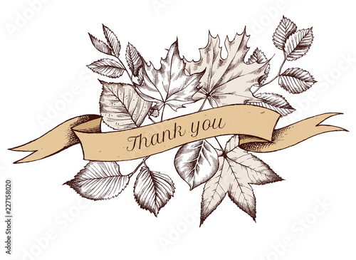 Ribbon design of autumn leaves with thank you sing. Hand drawn vector illustration - 227158020