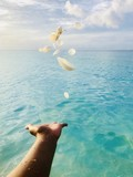Sea Shells on a Hand at a Beach