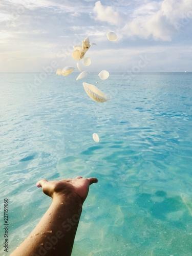 Morze muszle na rękę na plaży