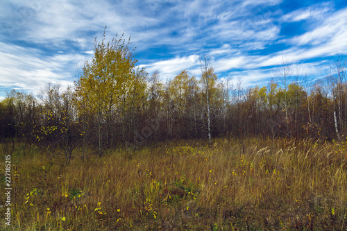 Autumn deciduous forest on a background of blue sky - 227185215
