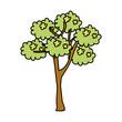 tree plant isolated icon