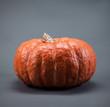 Quadro pumpkin on gray background