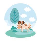 cute dog in park - 227211672