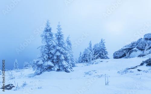 Foto Murales Verschneite Tannen