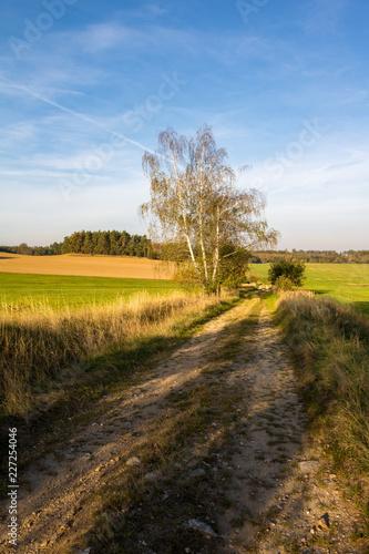 Sticker Dirt road between meadows and fields under blue sky
