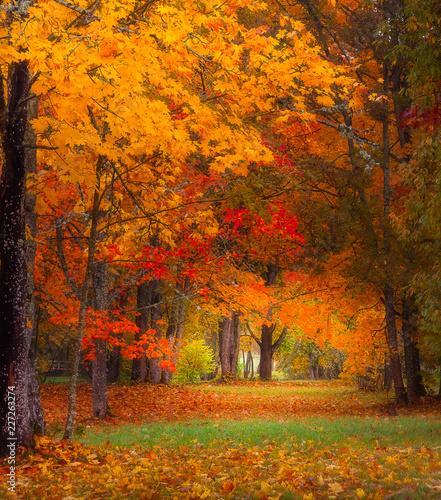 Foto Murales autumn landscape