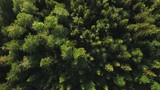 Aerial view of green virgin forest - 227264272