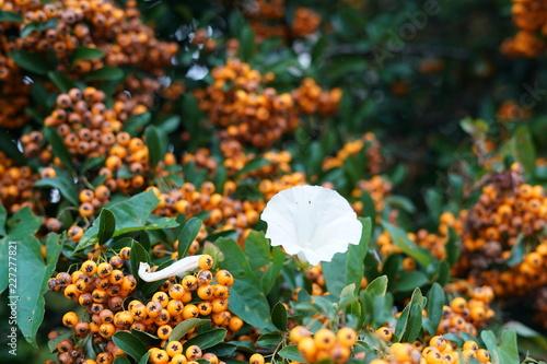 Blumen 22092018