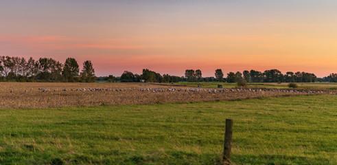Kraniche bei Sonnuntergang © Erik