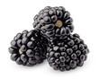 Leinwandbild Motiv blackberry isolated on white background, clipping path, full depth of field