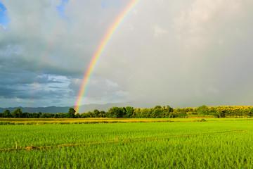 Rainbow over field while raining on sunny day.