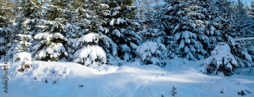 Winter landscape with snow covered trees. Winter background. - 227336652