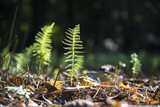 small fern leaf is growing on the forest ground, nature background with copy space - 227338010