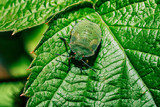 Green bug with red eyes. - 227339479