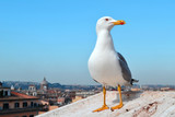 seagull on the roof of a house