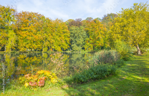 Foto Murales Trees in autumn colors along a stream in a meadow in sunlight at fall