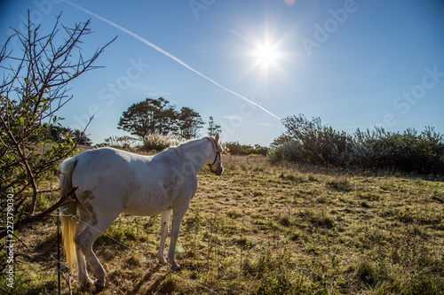 cheval blanc au soleil
