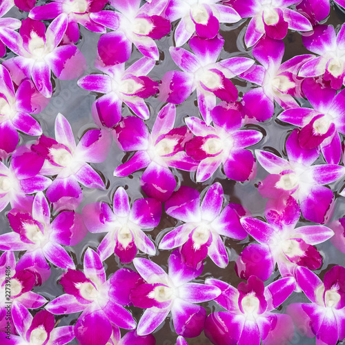 orchid flowers background - 227393486