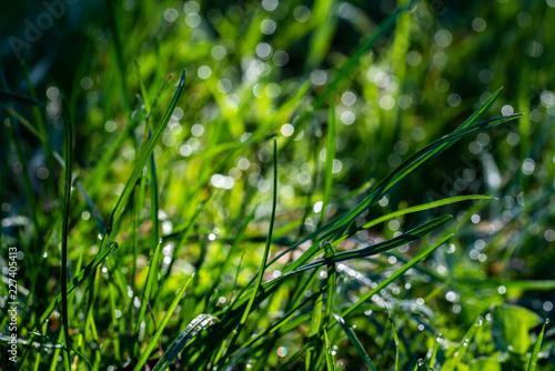 Graslandschaft im Sonnenschein - 227405413