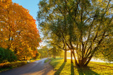 park on a sunny morning - 227412298