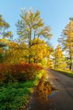 sunny landscape in autumn - 227412469