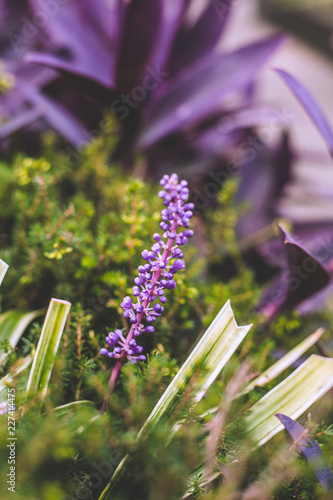 blue flowers on green background - 227414475
