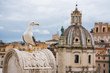 Quadro Seagull in Rome on a rooftop with buildings in the background