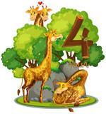 Four giraffe in nature - 227449637