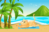 Yellow cat relax at the beach - 227450667