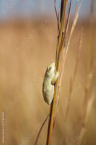 tropical frog on the grass