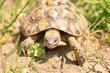 Leinwanddruck Bild - Turtle in nature