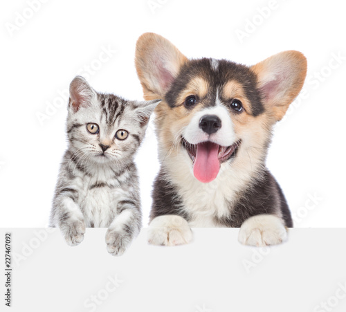 Cat and dog peeking behind empty white board. isolated on white background. Space for text