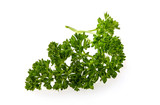 Green leaf of parsley isolated on white background - 227490861